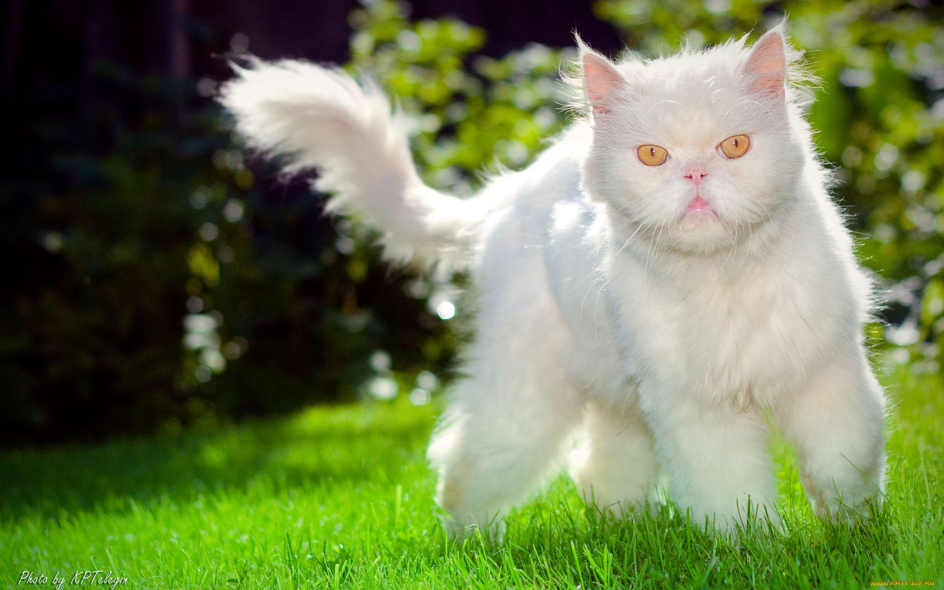 White catskittens needing rescueadoption  Home  Facebook